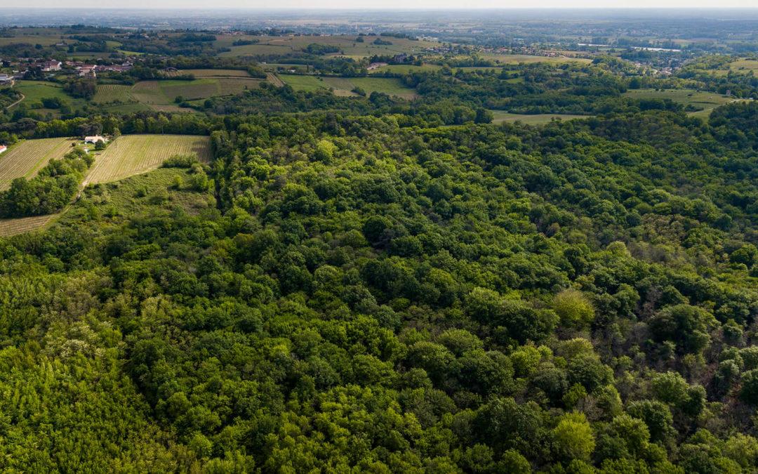 Signez l'appel pour la sauvegarde des forêts françaises